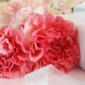 5gatu-tanjoubi-carnation