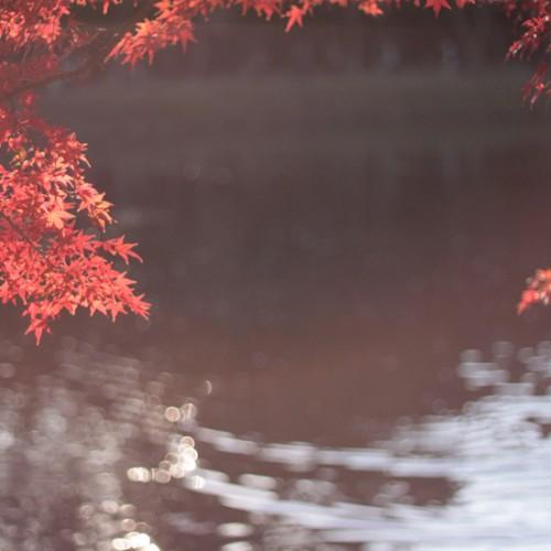 11月生まれ 画像 紅葉